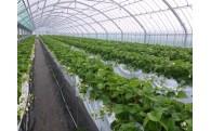 「平戸式もうかる農業」がさらに加速しました!