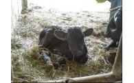 日本一の生産者が集う小林市の和牛農家支援