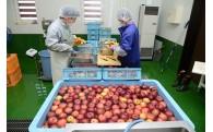 シードル事業でりんご農家を支援!