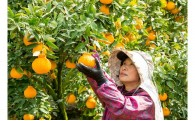 みかん作りのプロがつくる高級柑橘