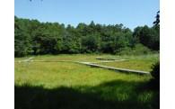 ◎貴重な植物が生育する吉賀池湿地を整備