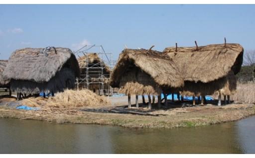 安国寺集落遺跡公園・弥生のムラ古代住居等修復事業
