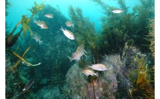 う 博多湾漁場クリーンアップ