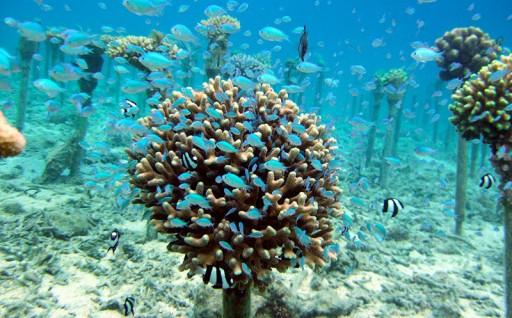 「サンゴの村」として環境保全活動に取組んでいます