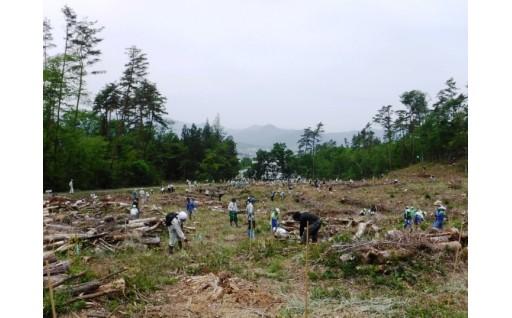 市有林の再生を目指して
