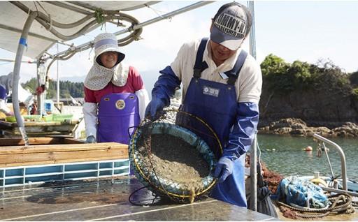 広田湾産イシカゲ貝の認知度向上と販路拡大