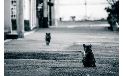 【目標額速報】野良猫ゼロ!動物たちの命を大切に