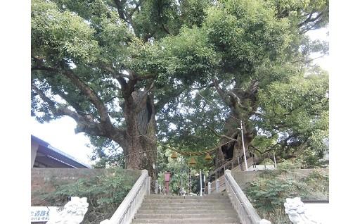 クスノキの保存:長崎市出身の福山雅治さんが・・・