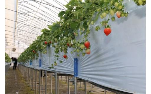 農業担い手確保に関する事業
