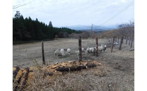 「日本で最も美しい村」づくり事業補助金への活用