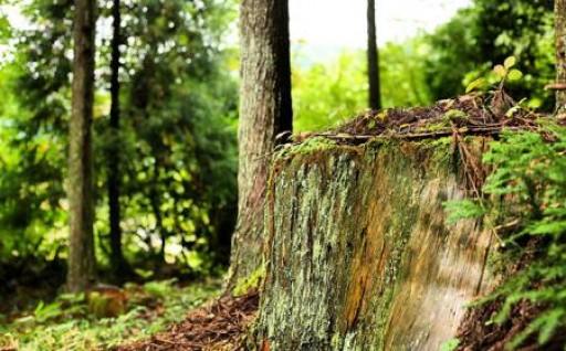 自伐林業者の育成を行っています