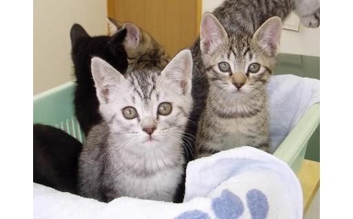 GCF 猫の不妊去勢手術助成事業