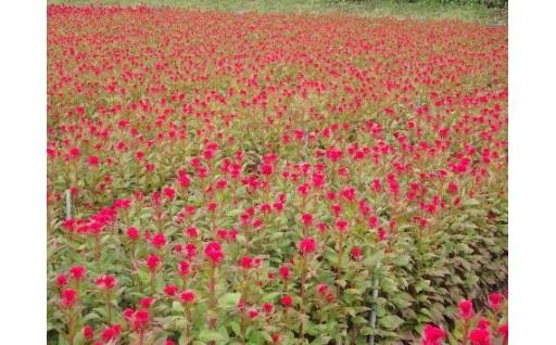 農業生産物苗代及び種代補助事業