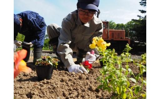 ★遠別農業高校「花いっぱい運動」