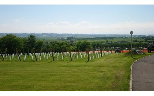 ワイン城の前庭が一面ブドウ畑になります