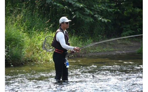 清流朱太川の天然アユ友釣りに多くの釣り人が来訪!