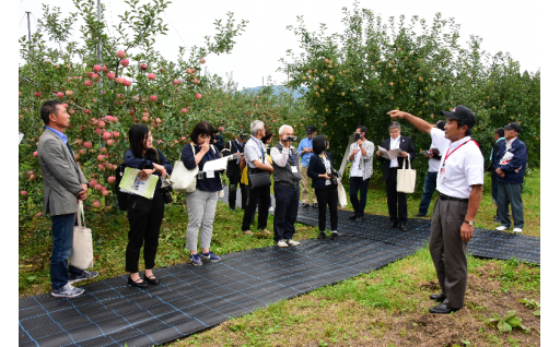雪に負けない、りんご栽培を推進