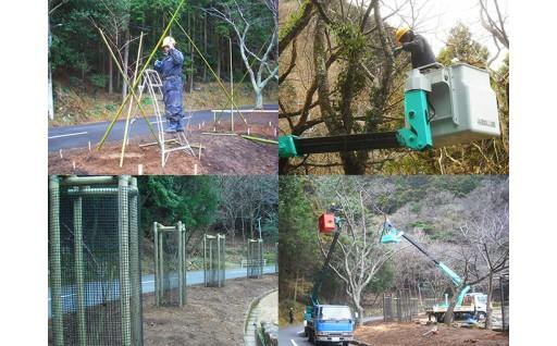 (GCF)国立公園の桜木の植樹等を実施しました。