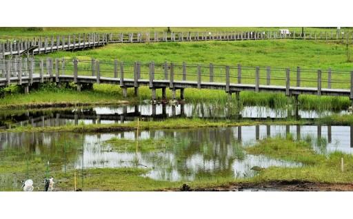 川南湿原一般管理事業