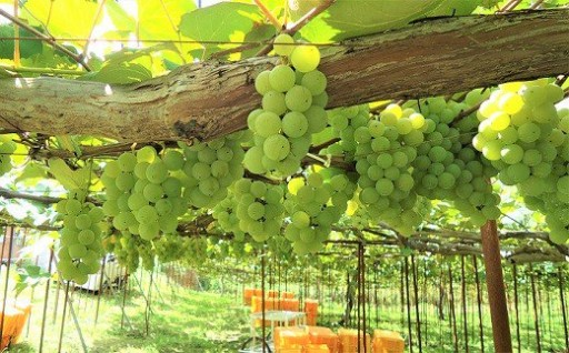 ワインによる地域振興事業にも活用しています!