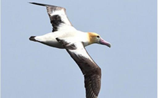 使い道に「鳥類の保護に関する事業」を追加しました
