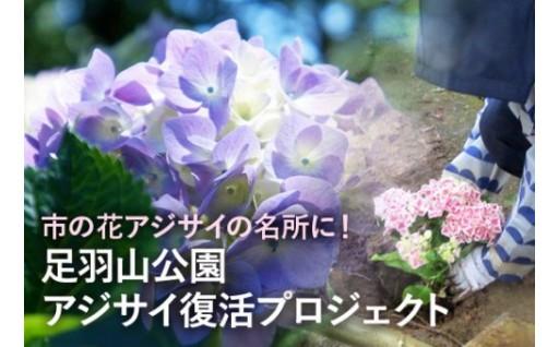 足羽山公園を市の花アジサイの名所へ復活させたい!