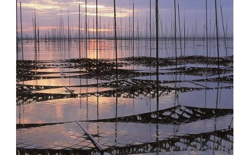 16年連続日本一の有明海産佐賀海苔をつくるために