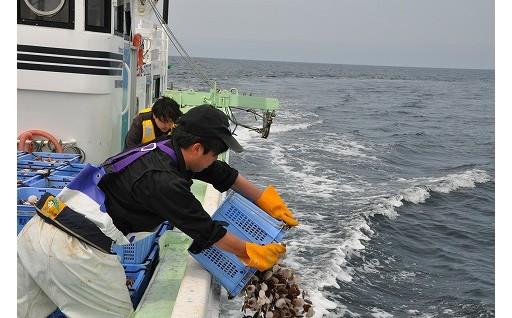 ホタテ新漁場での今期の漁が終了しました