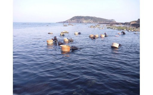 【自然・環境】海女文化を後世に!越前うに養殖事業