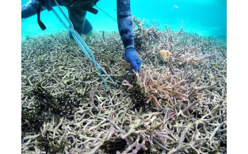 島のサンゴ礁を守る取組みを行っています。