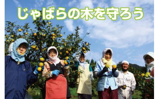 幻の果実「じゃばら」の木を守るために