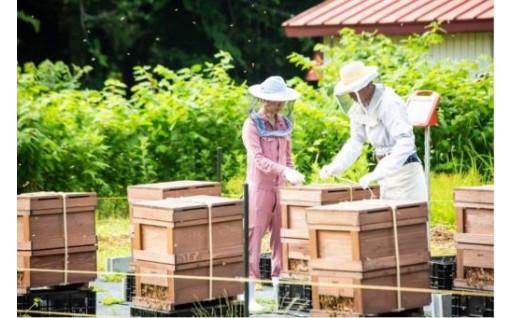 ふるさとではじめた蜂蜜づくり 巣鴨養蜂園
