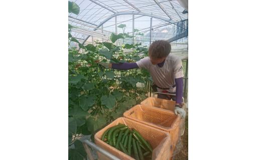 園芸農業機械・施設等整備支援事業