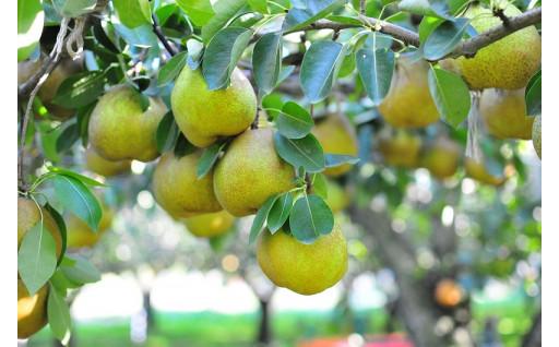 高品質な果物を栽培するため、寄附を活用しています
