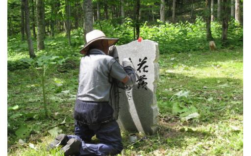 丸山句碑の森の碑文に墨入れしました