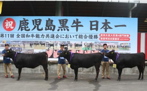 日本一の鹿児島黒牛を維持するために!