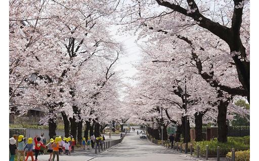 寄附金の活用実績は武蔵野市公式ホームページへ