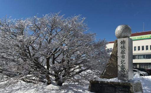 氷で小枝が覆われて綺麗な景色が広がりました!