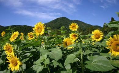 (7)自然環境並びに地域景観の保全及び活用に関する事業