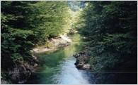 (1)ふるさとの自然、景観を活かした事業