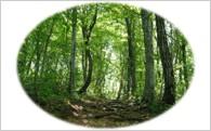 ③ 尾花沢を彩る自然環境の保全及び景観の維持、再生のための事業