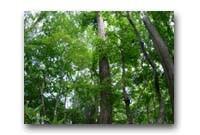 2 自然保護や緑化事業のために