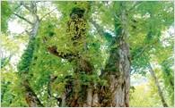 ①「受け継ぐふるさとの四季折々の景観美とこころ」~自然・環境保護と地域芸能文化の伝承の取り組み~