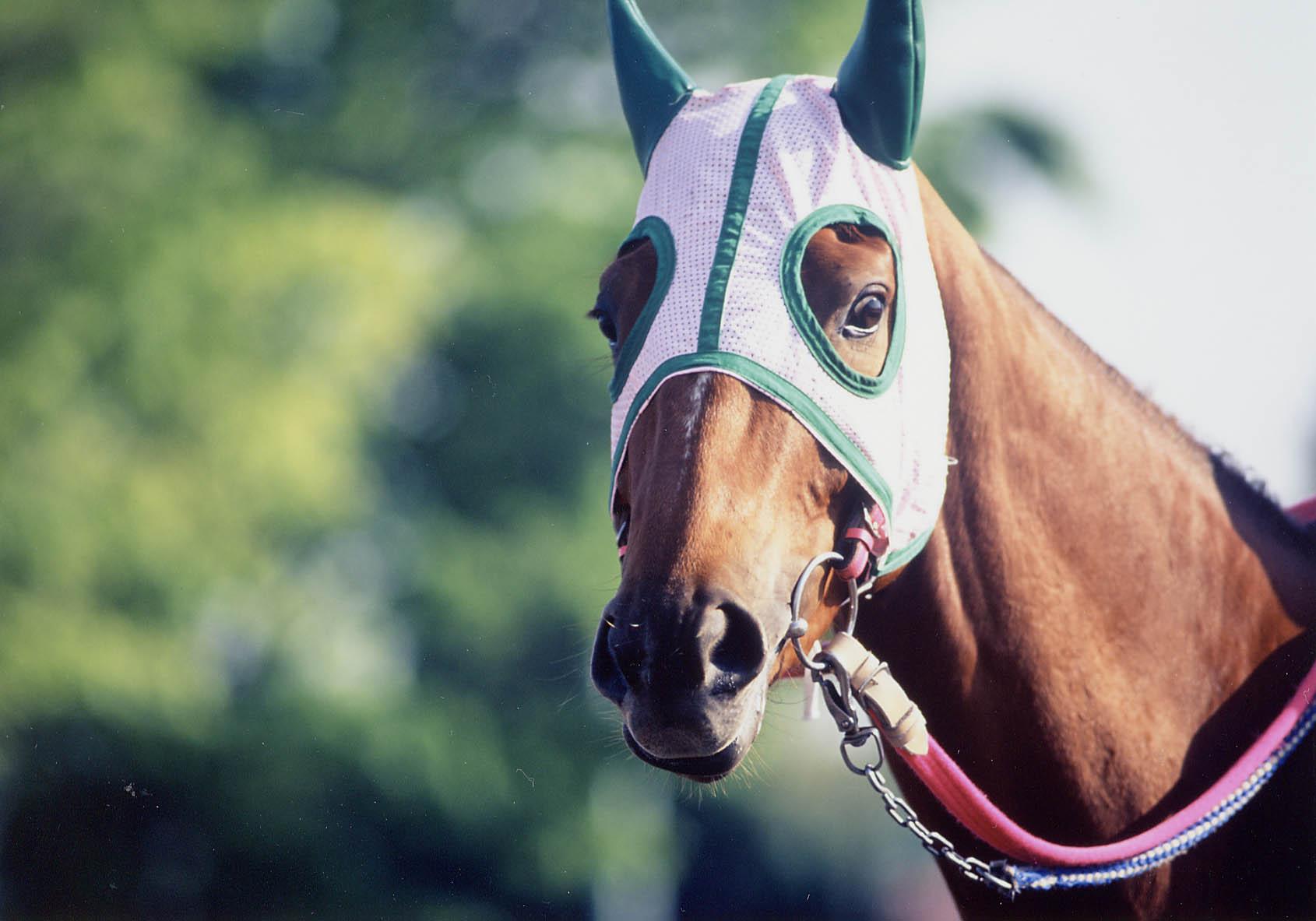 (2)競走馬の里美浦をひろくPRするための事業