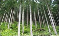2.森林づくり事業