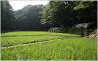 3.地球環境にやさしいまちづくりを応援