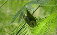 (1)世界自然遺産など環境保全の推進に関する事業