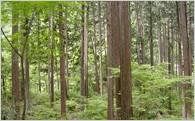 ふるさとの水を育む森林保全に関する取り組み