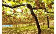 地域資源を活用した果樹園交流推進のための事業
