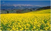 (3)自然・景観・観光